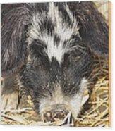Farm Pig 7d27361 Wood Print