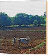 Farmer with cow Wood Print