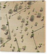 Farming Fields, Sant Antoni De Portmany Wood Print