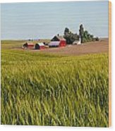 Farmlands Near Davenport Wood Print