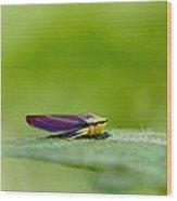 Fashion Bug - Leafhopper Wood Print by  Andrea Lazar