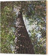 Father Pine Wood Print