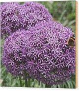 Favorite Butterfly Spot Wood Print