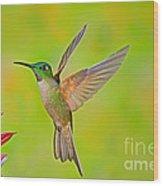 Fawn-breasted Brilliant Hummingbird Wood Print