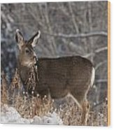 Fawn Eating Wood Print