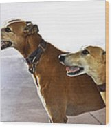 Fawn Greyhound Dogs Profile Wood Print