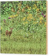 Fawn In Flowers Wood Print