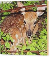 Fawn In The Forest - Inspirational - Religious Wood Print