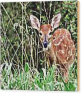 Fawn In The Grass Wood Print by Marty Koch