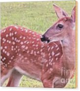 Fawn In The Waning Summer Wood Print
