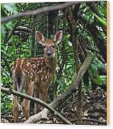 Fawn In The Woods Wood Print