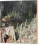 Fawn Front Yard Divide Co Wood Print