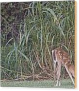 Fawn Snacking Wood Print