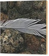 Feather And Rocks Wood Print