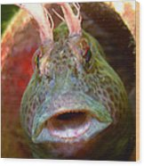 Feather Blenny - A Fish  Wood Print