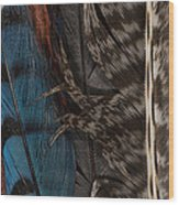 Feather Collection Wood Print