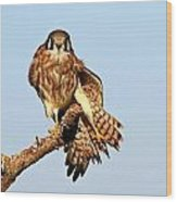Feather Display Wood Print