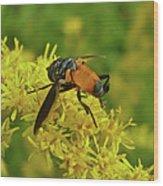Feather-legged Fly On Goldenrod - Trichopoda Wood Print