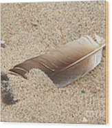Feather On The Beach Wood Print