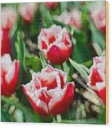 Feather Red Wood Print