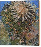 Feather Star (crinoidea Wood Print