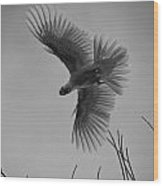 Feathered Flight  Wood Print