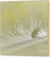 Feathered Softness Wood Print