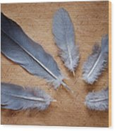 Feathers And Old Letter Wood Print