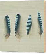Feathers No1 Wood Print