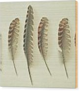 Feathers No2 Wood Print