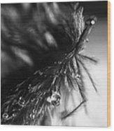 Feathery Drop Wood Print