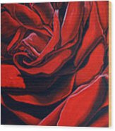 February Rose Wood Print