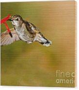 Feeding Anna's Hummingbird Wood Print