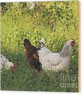 Feeding Chickens Wood Print