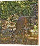 Feeding Doe. Polk County Fl. Wood Print