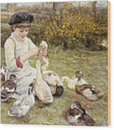 Feeding Ducks Wood Print