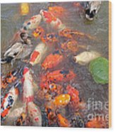 Feeding Frenzy Wood Print