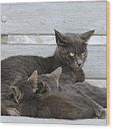 Feeding The Kittens Wood Print