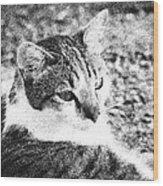 Feline Pose Wood Print