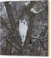 Felis Silvestris Catus In Winter Wood Print