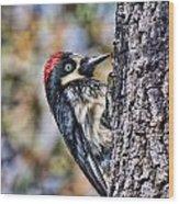 Female Acorn Woodpecker Portrait Wood Print
