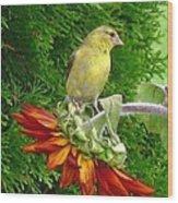 Female American Goldfinch Wood Print