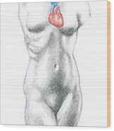 Female Anatomy Heart Wood Print