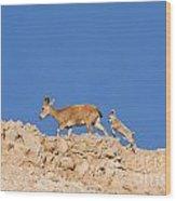 female and young Nubian Ibex Wood Print