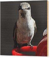 Female Anna Hummingbird Wood Print
