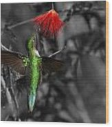 Female Anna's Hummingbird Wood Print by Old Pueblo Photography