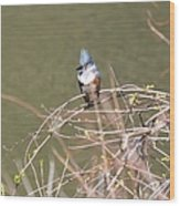 Female Belted Kingfisher Wood Print