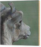 Female Bighorn Wood Print