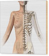 Female Body With Bone Skeleton Wood Print