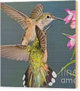 Female Broad-tailed Hummingbird Wood Print